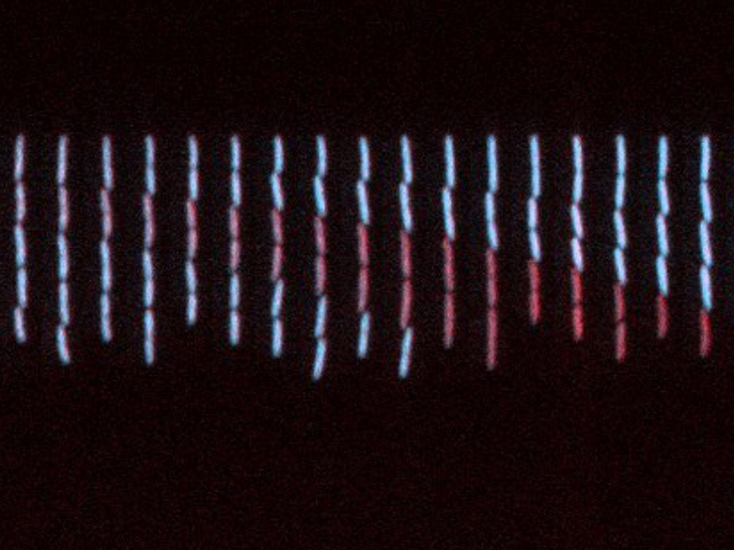 Microscopy time-lapse pictures of E. coli cells growing in a microfluidics channel (from left to right), undergoing gene copy number mutations (high intensity of blue fluorescence: high copy number; low intensity of blue fluorescence/red fluorescence: low copy number) © IST Austria – Guet group