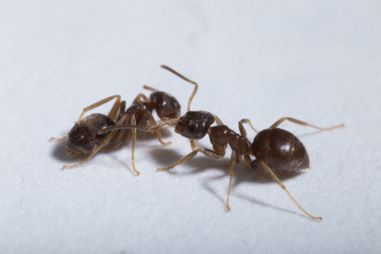 """Podcast: Christopher Pull talks about """"No mercy for sick ants"""""""