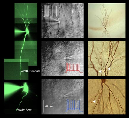 New insight in dendritic computation