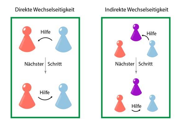 Darstellung der direkten und indirekten Wechselseitigkeit. Direkte Wechselseitigkeit: Zuerst hilft Blau Rot. Im nächsten Evolutionsschritt der Simulation merkt sich Rot das und hilft nun Blau. Indirekte Wechselseitigkeit: Zuerst hilft Blau Violett und Rot beobachtet das. Im nächsten Evolutionsschritt weiß Rot um den guten Ruf von Blau und hilft nun auch ihr. © Laura Schmid
