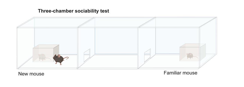 The three-chamber sociability test