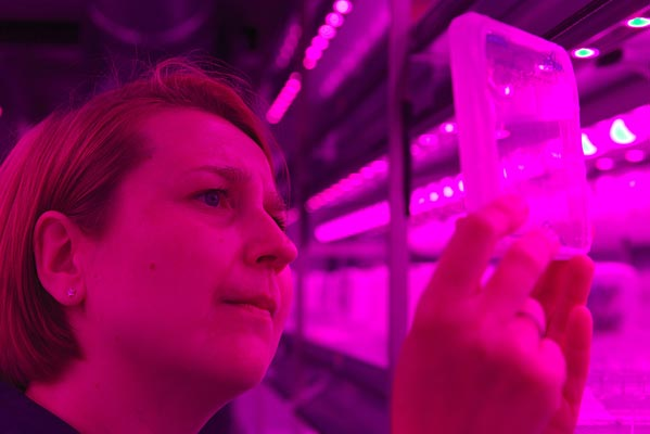 Checking the seedlings in the in vitro room. (c) IST Austria